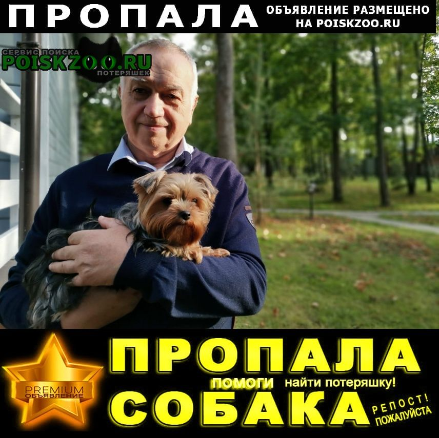 Пропала собака мини йоркширский терьер Истра