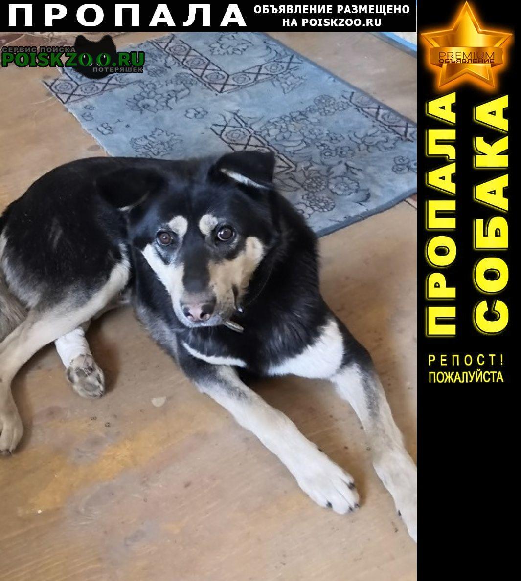 Пропала собака кобель. Хабаровск