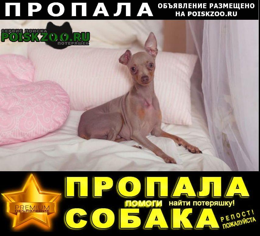 Пропала собака наше счастье и любовь станица нижнебакан Крымск