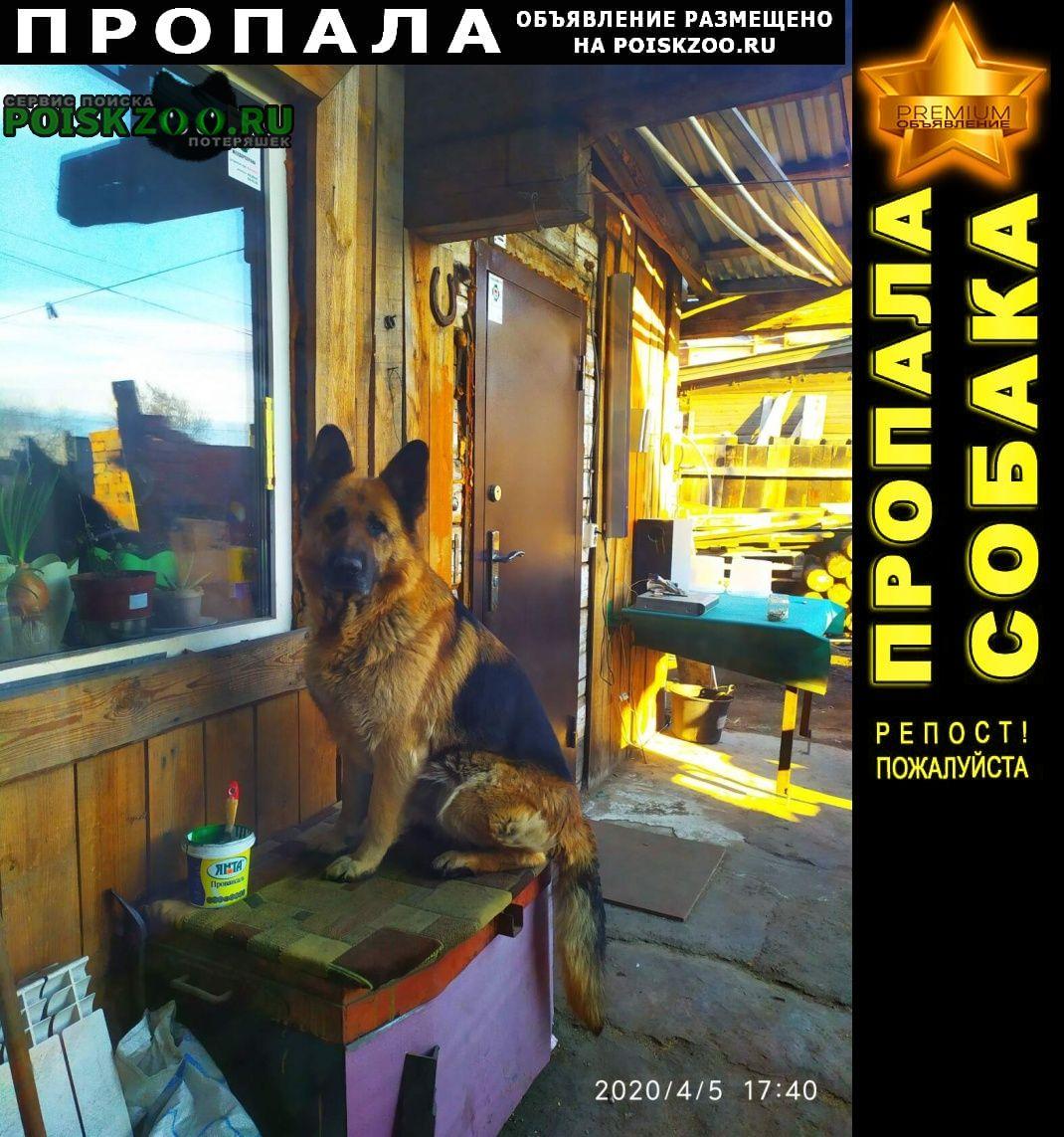 Пропала собака срочно, срочно, срочно  Иркутск