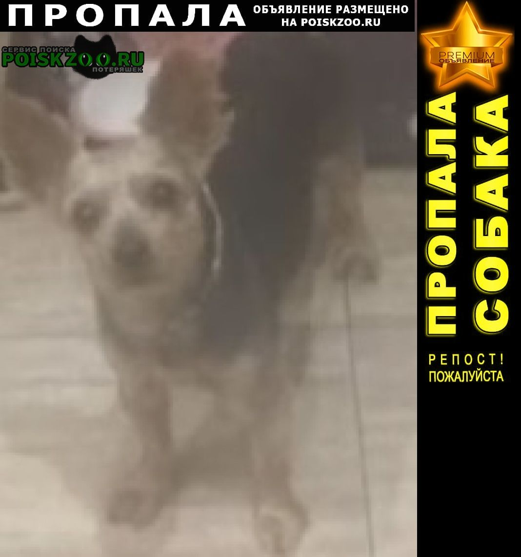 Истра Пропала собака