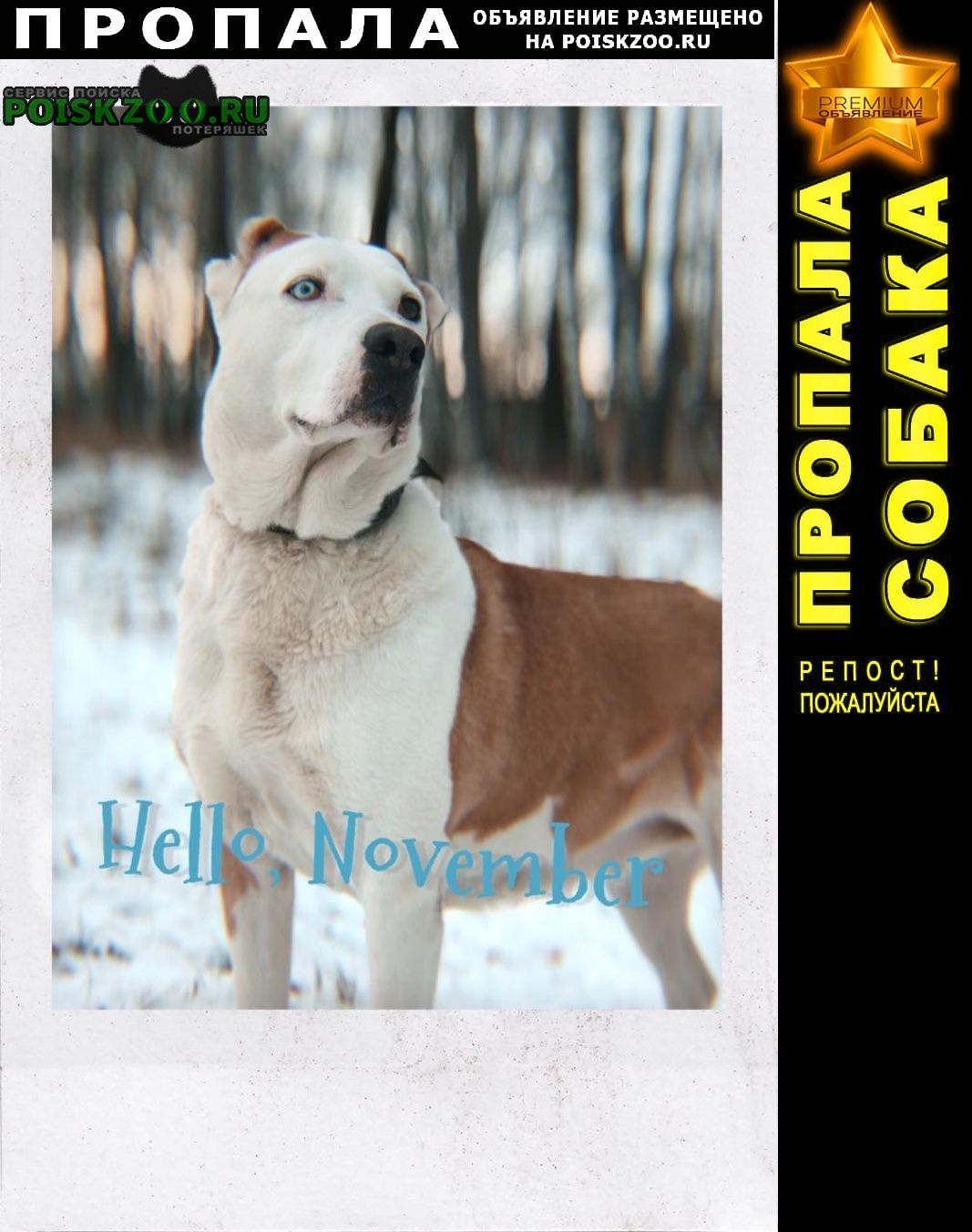 Пропала собака район поиска нара-обнинск Балабаново