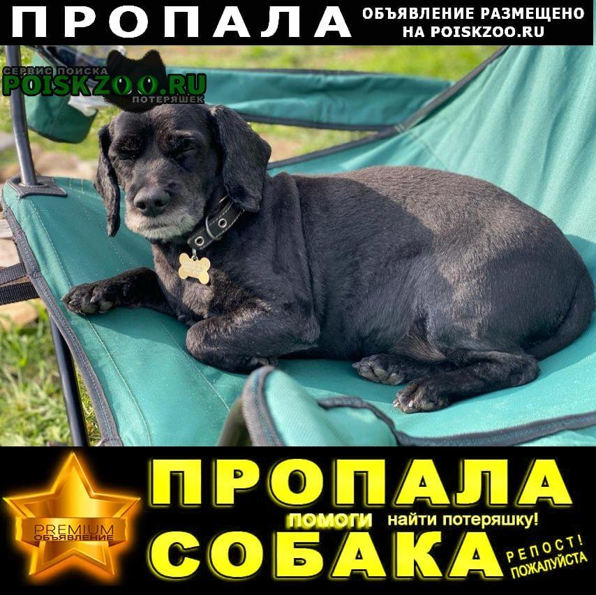 Пропала собака sos sos sos Мытищи
