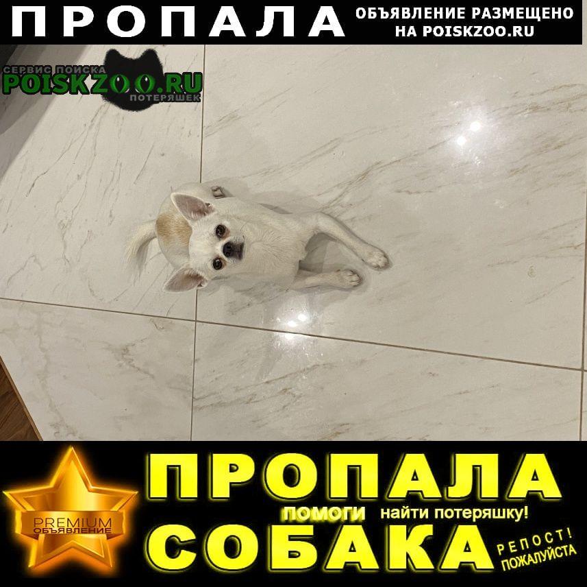 Пропала собака help Черкизово