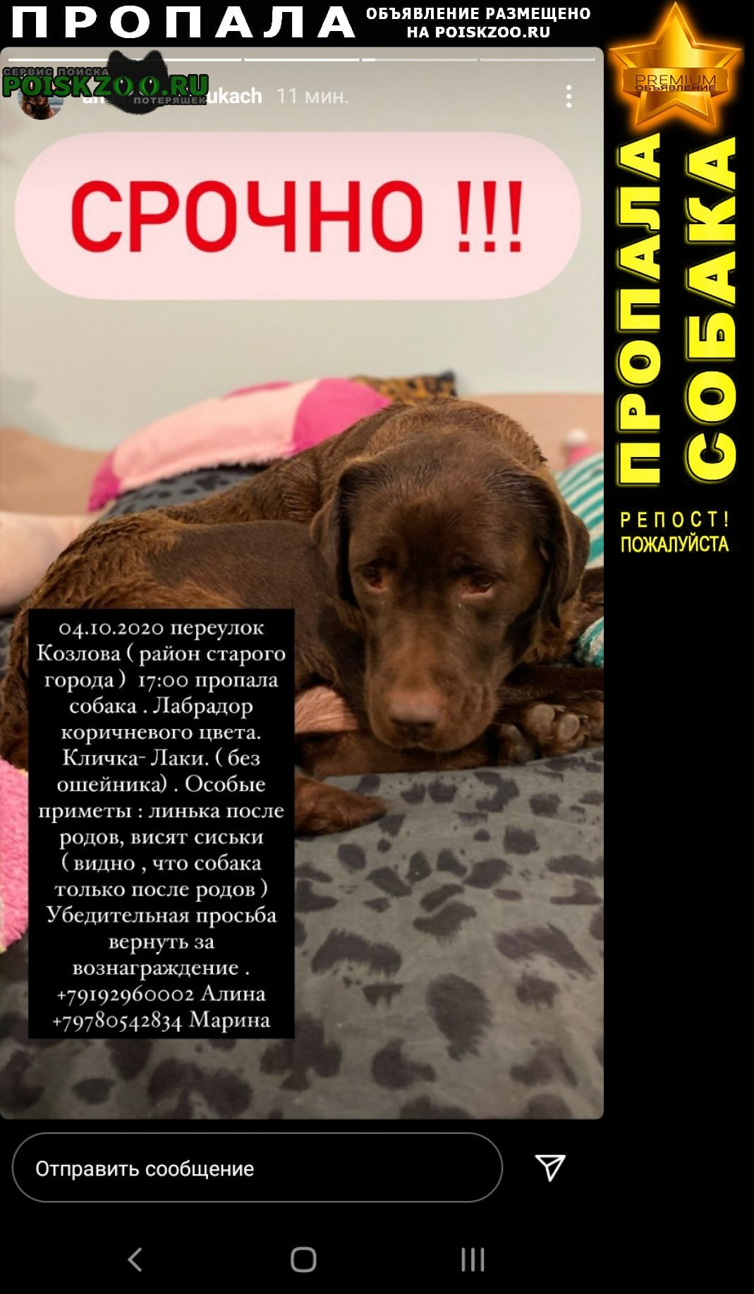 Пропала собака лабрадор коричневый кличка лаки Симферополь