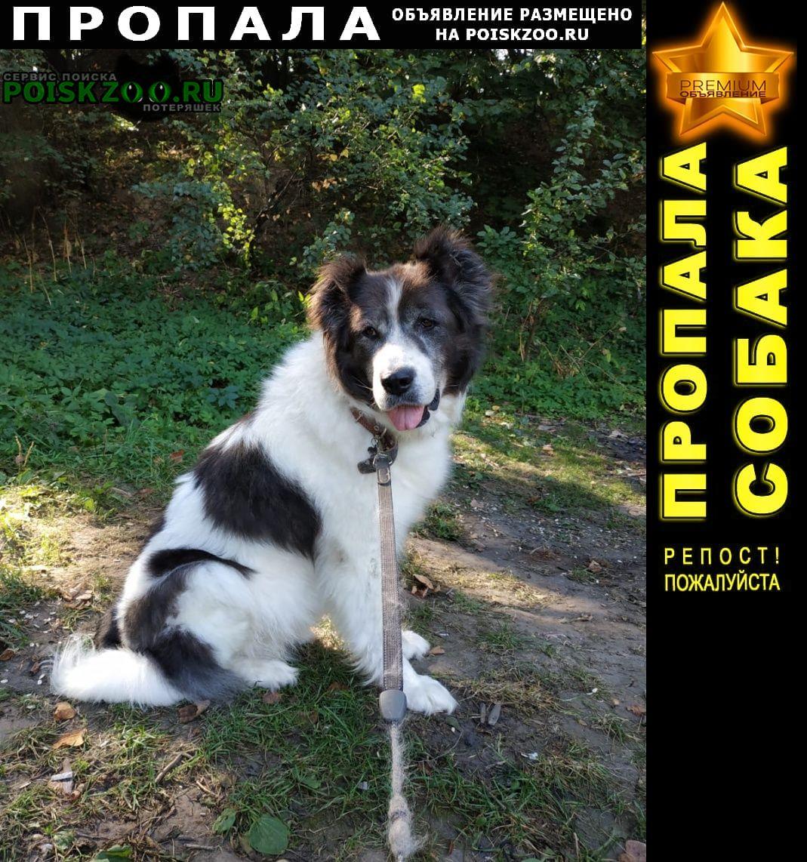 Пропала собака Переславль-Залесский
