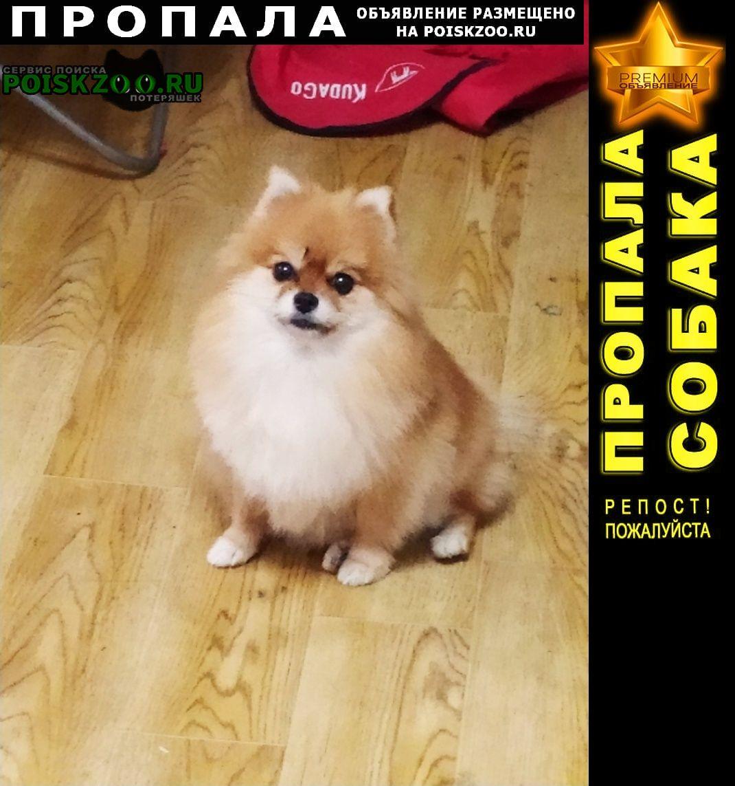 Пропала собака Пушкино