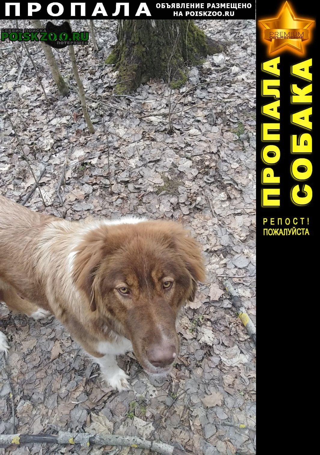 Пропала собака Спасск-Рязанский