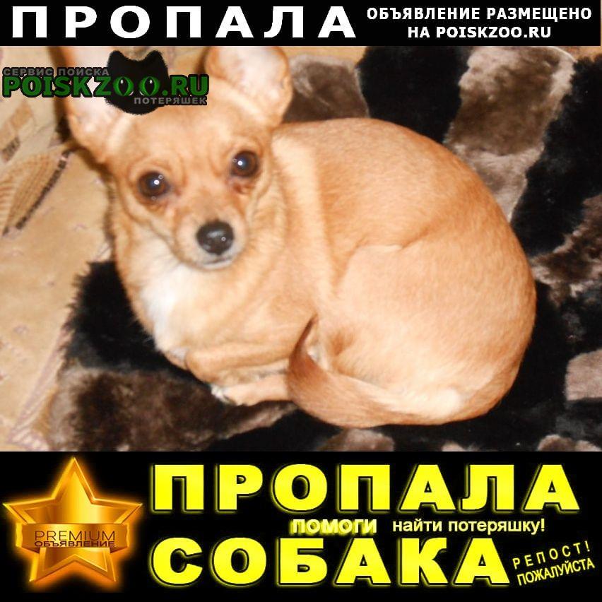 Пропала собака Тамбов