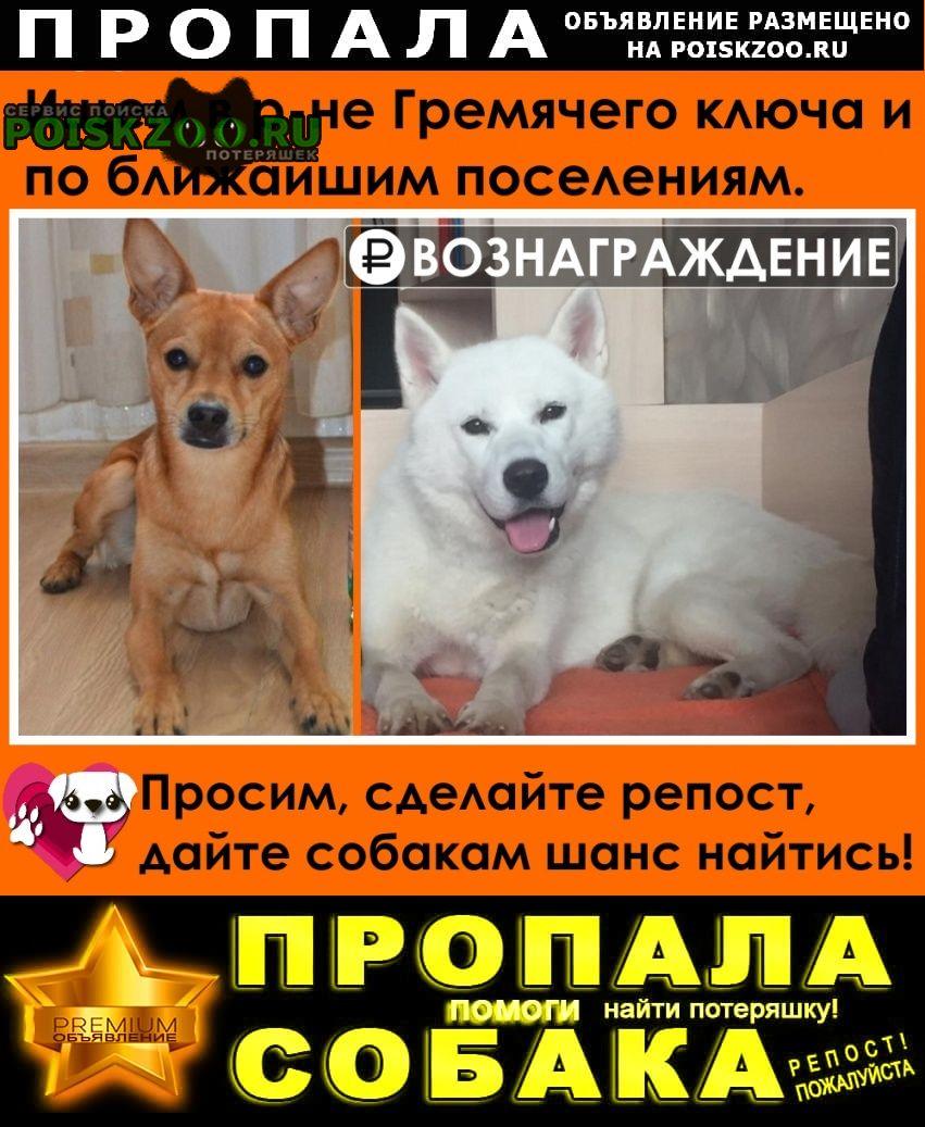 Сергиев Посад Пропала собака