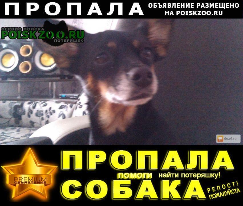 Пропала собака пожалуйста помогите найти собаку Екатеринбург