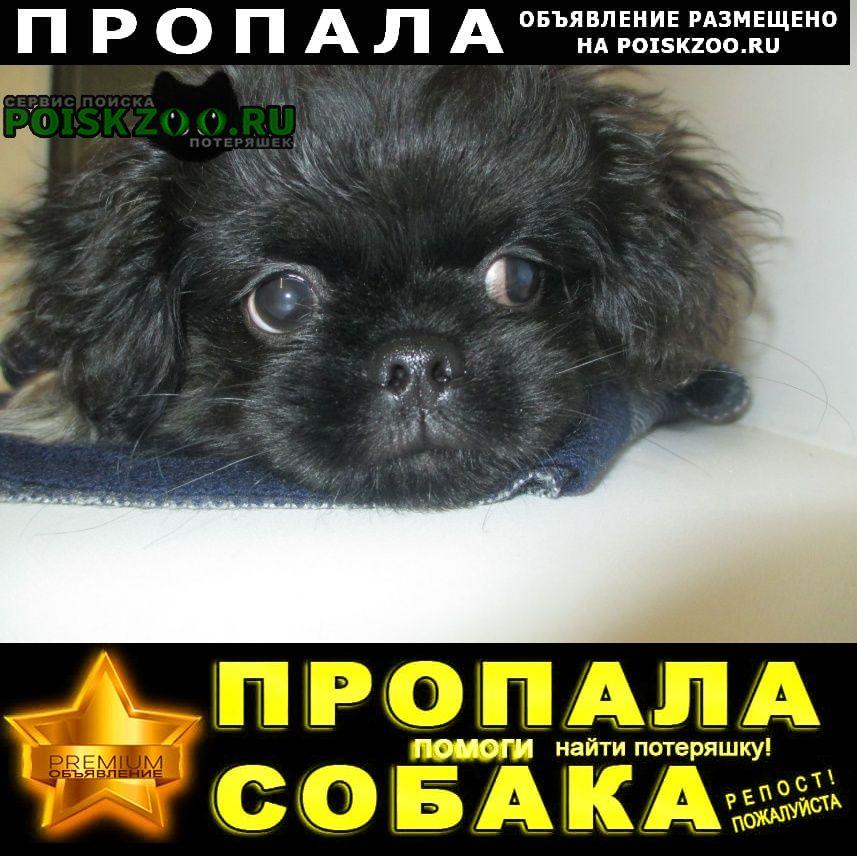 Пропала собака кобель Тюмень