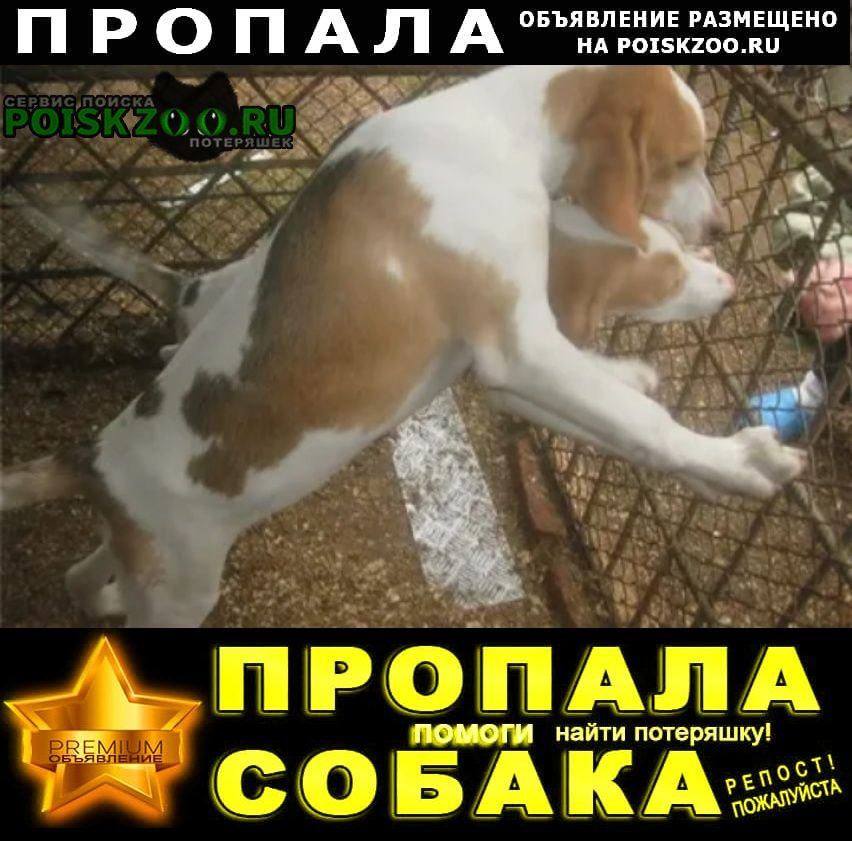 Пропала собака.. кобель эстонской гонче Семилуки