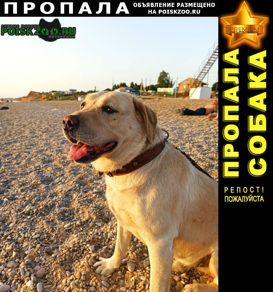 Пропала собака лабрадор Севастополь