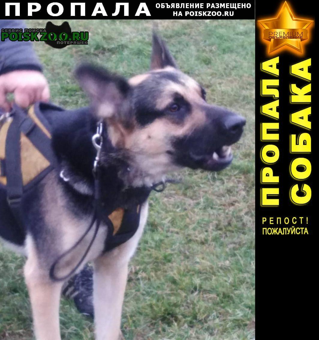 Пропала собака Кемерово