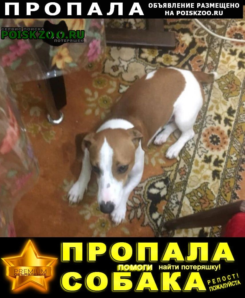 Пропала собака кобель Севастополь