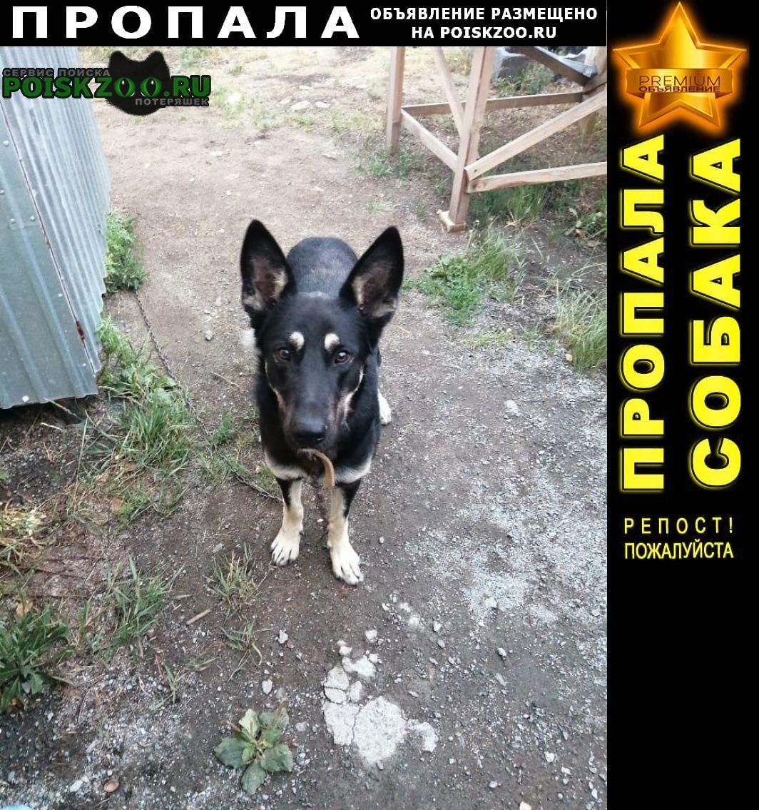 Пропала собака помогите найти друга Челябинск