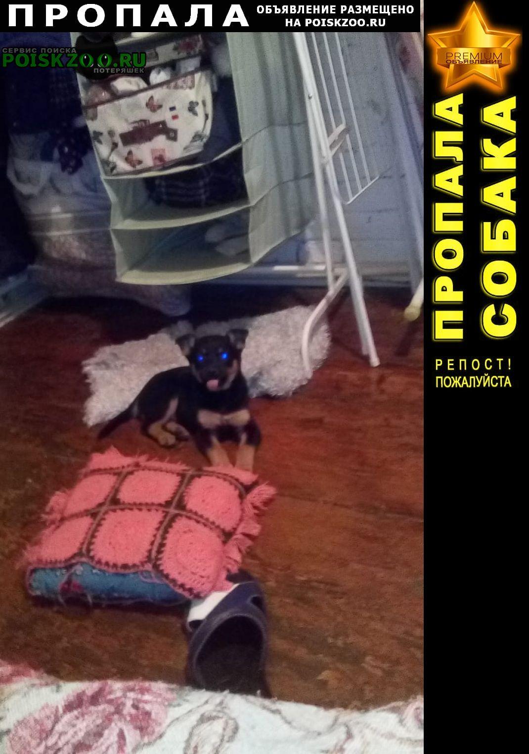 Пропала собака щенуля-девочка Оренбург