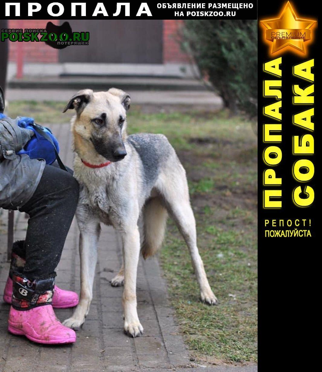 Владивосток Пропала собака кобель