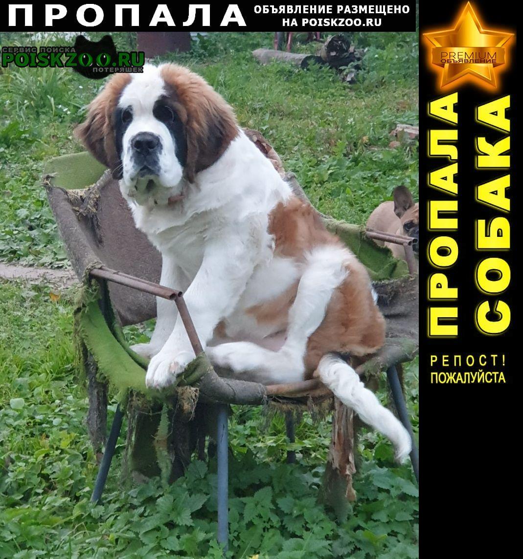 Пропала собака щенок девочка сенбернара Пушкино