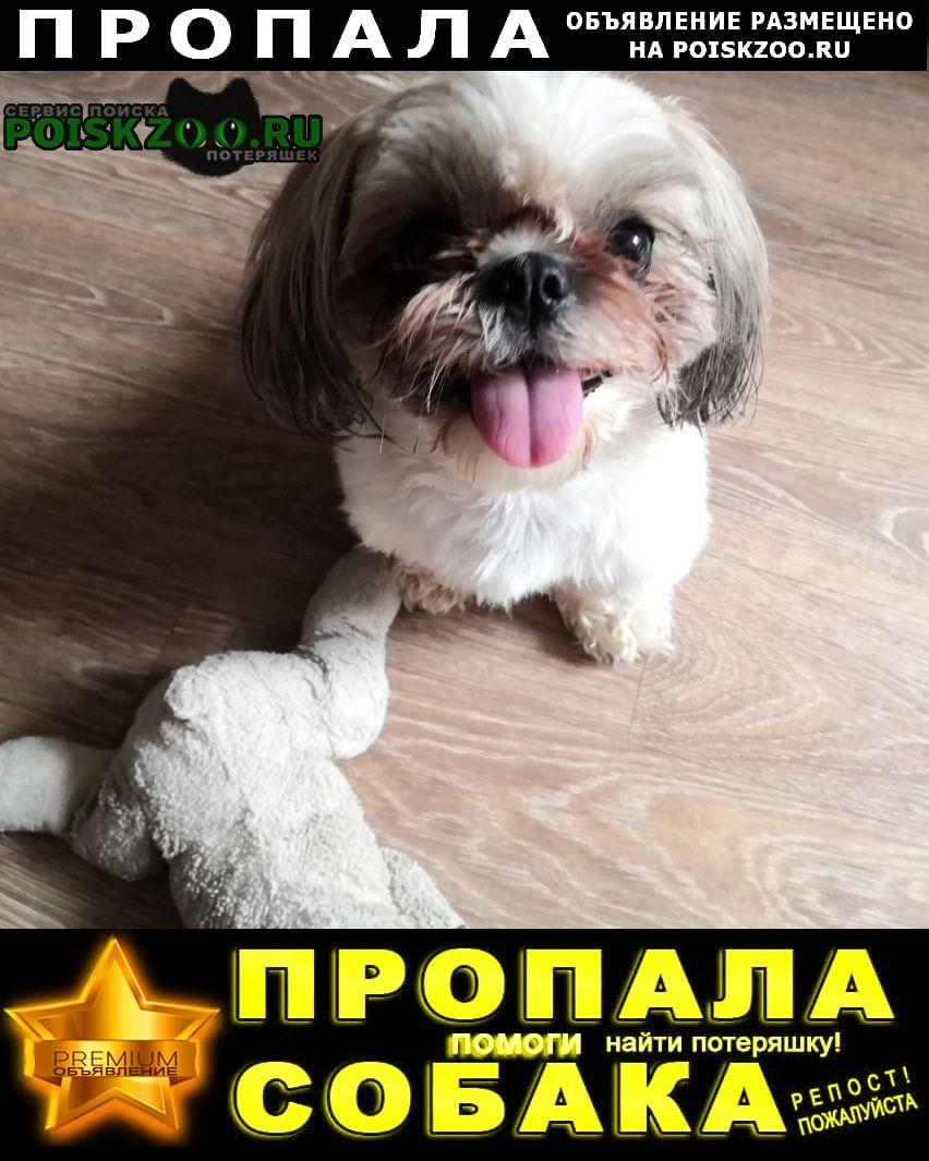 Пропала собака.. в период 20-21 час Тольятти