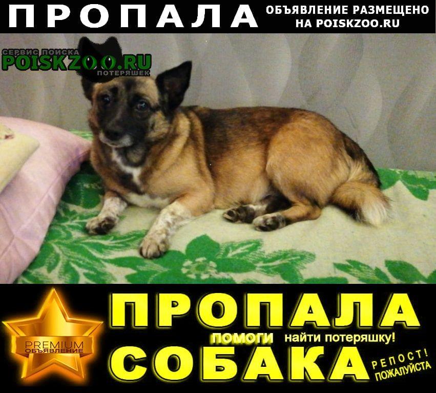 Пропала собака.. Красноярск