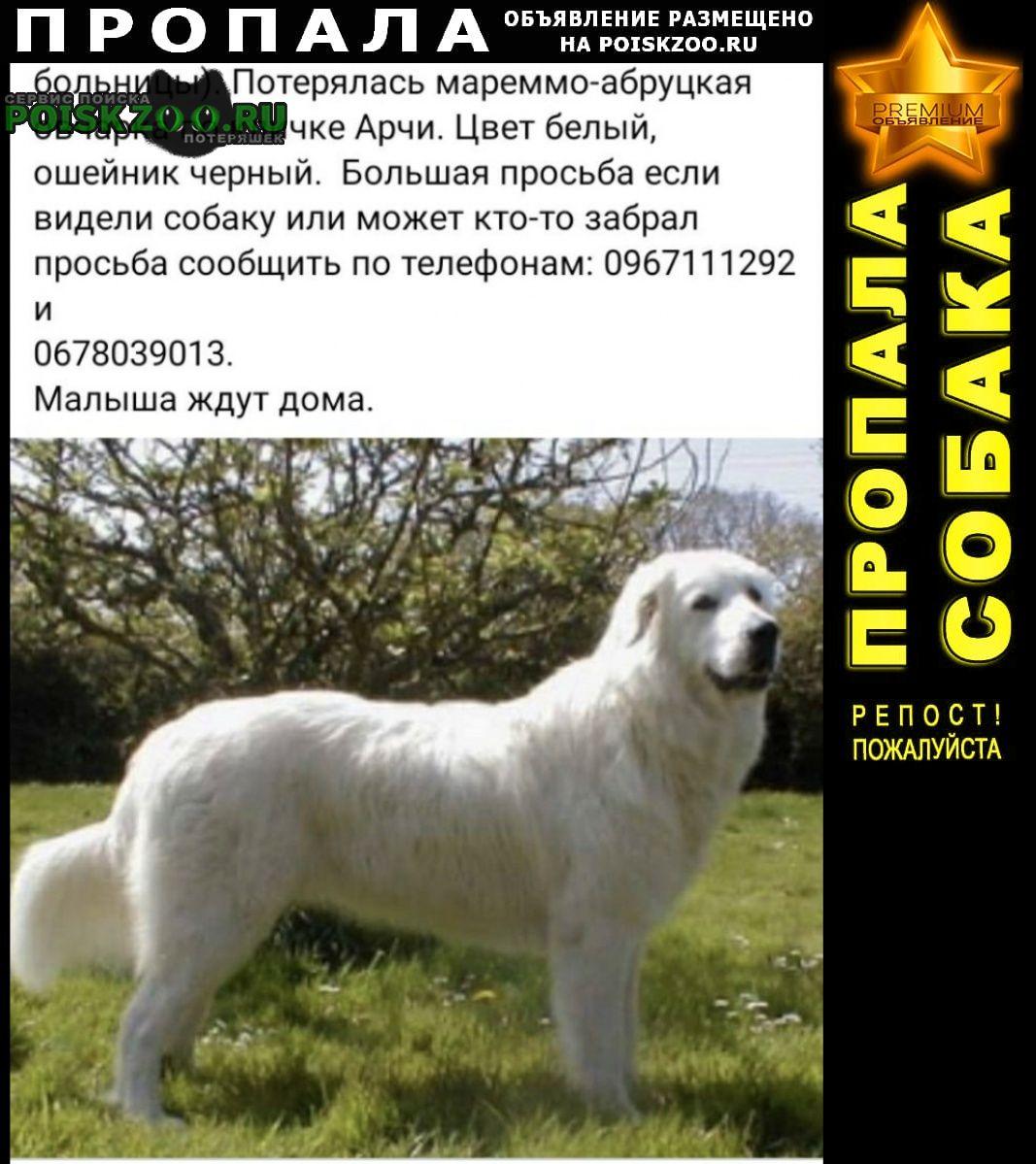 Пропала собака пожалуйг, помогите найти собаку Мариуполь