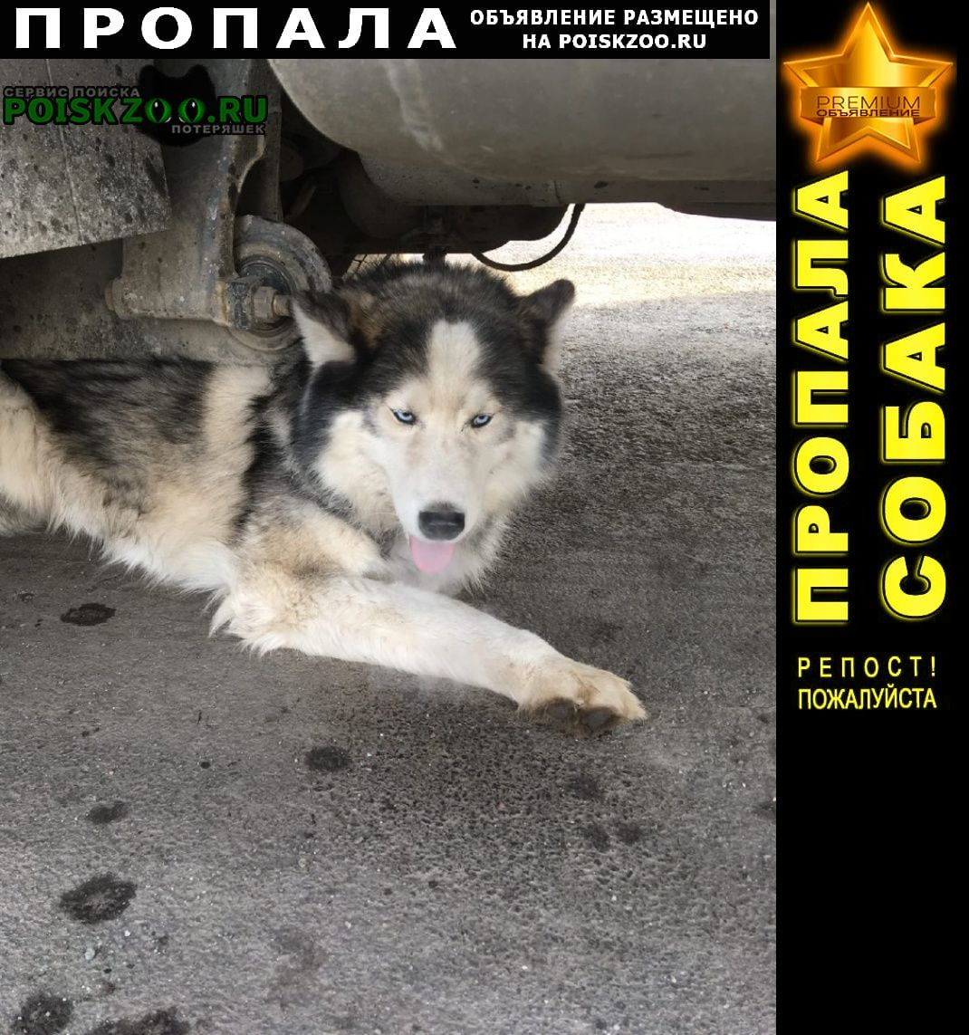Пропала собака Копейск