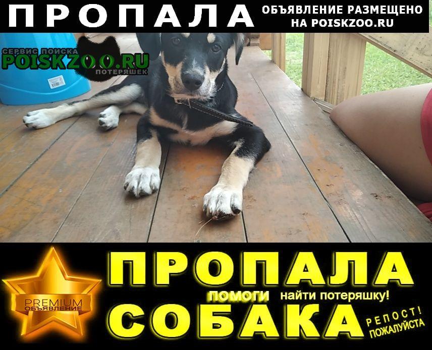 Пропала собака гира.. Чехов