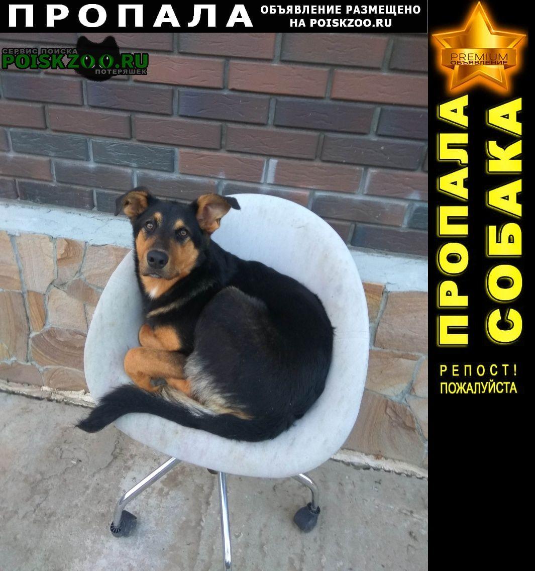 Пропала собака Солнечногорск