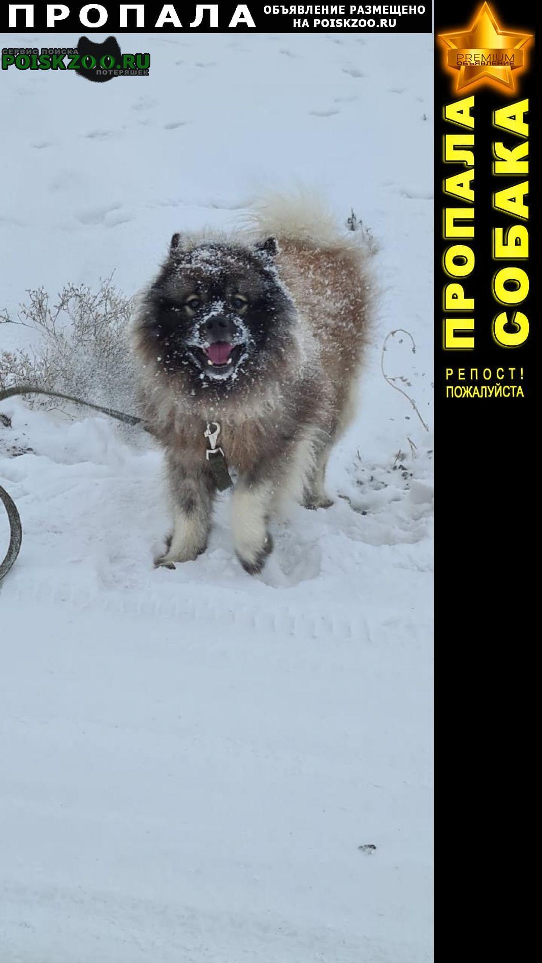 Пропала собака Новотроицк