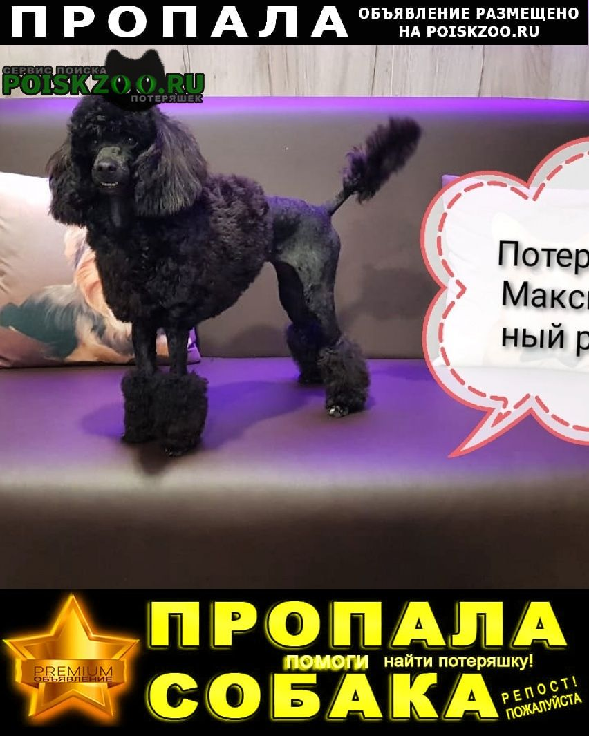 Анапа Пропала собака ст. гостагаевская