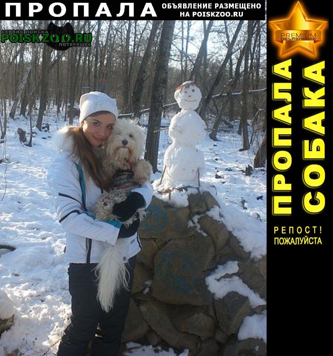 Пропала собака кобель белой болонки Краснодар
