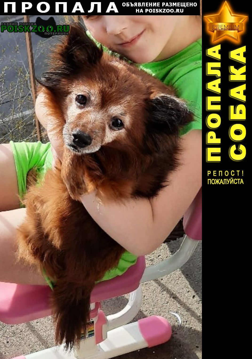 Санкт-Петербург Пропала собака той-терьер рыжего цвета