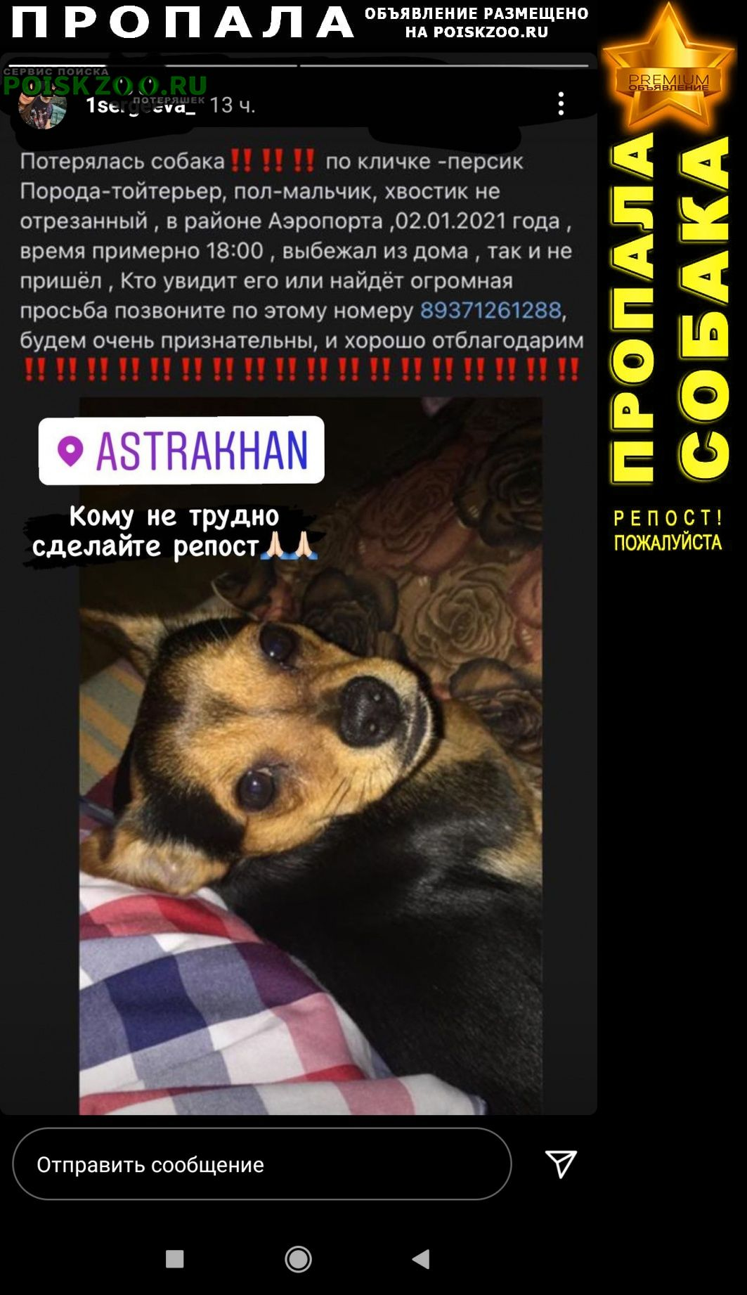 Пропала собака по имени-персик Астрахань