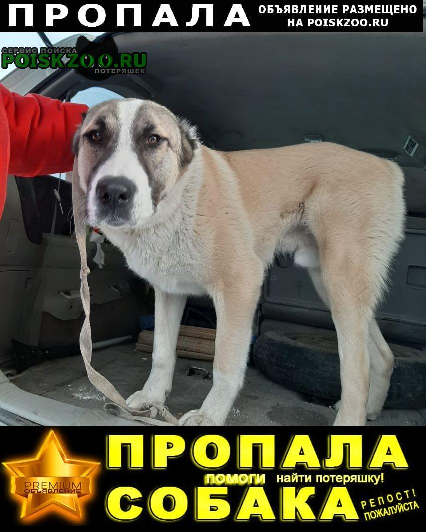 Пропала собака кобель южный Кемерово