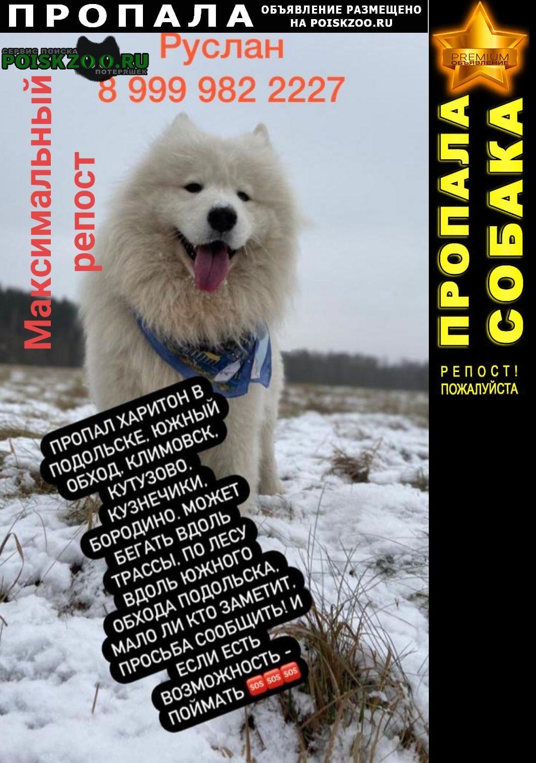Подольск Пропала собака самоед