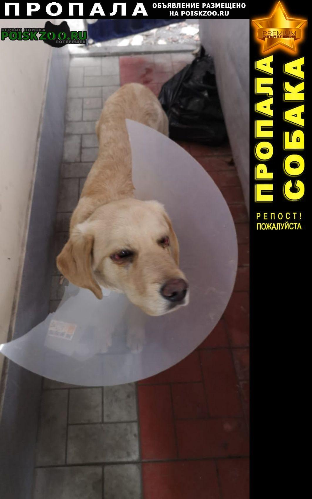 Владикавказ Пропала собака