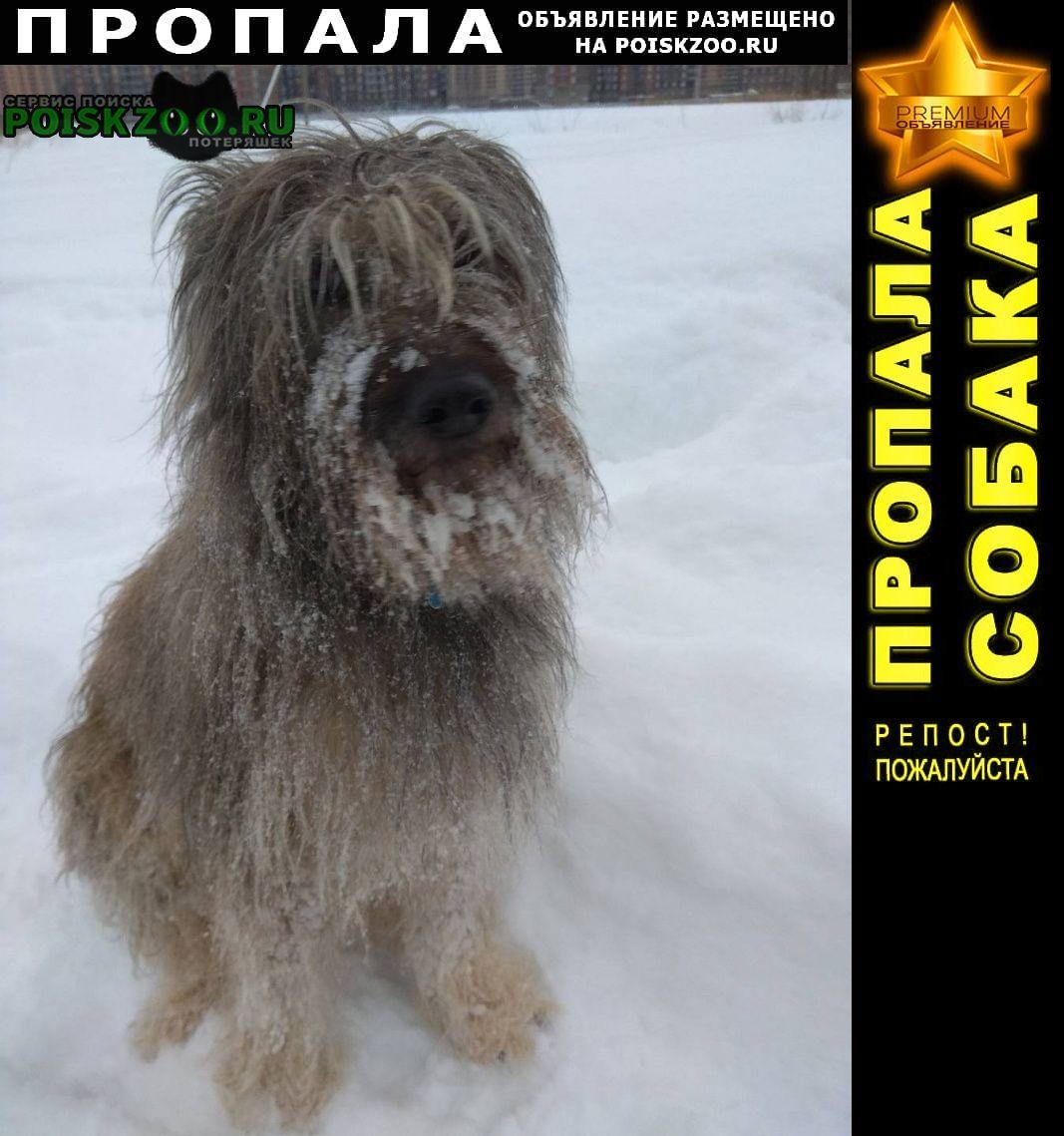 Пропала собака очень нужна помощь в поиске Санкт-Петербург