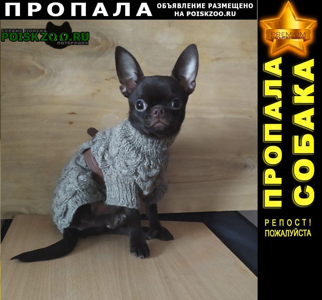 Нижний Новгород Пропала собака мальчик чихуахуа.