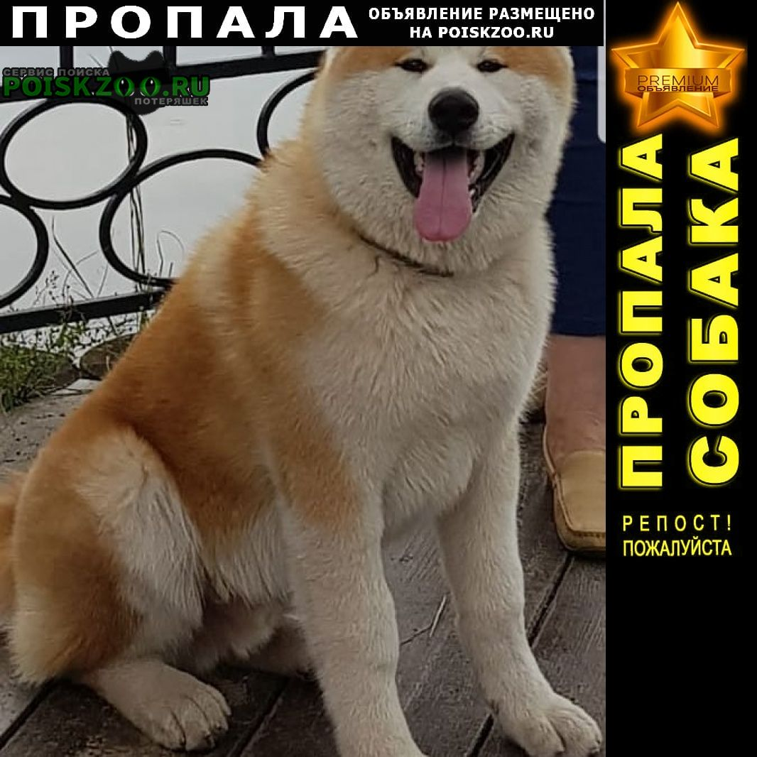 Пропала собака акита ину Красногорск