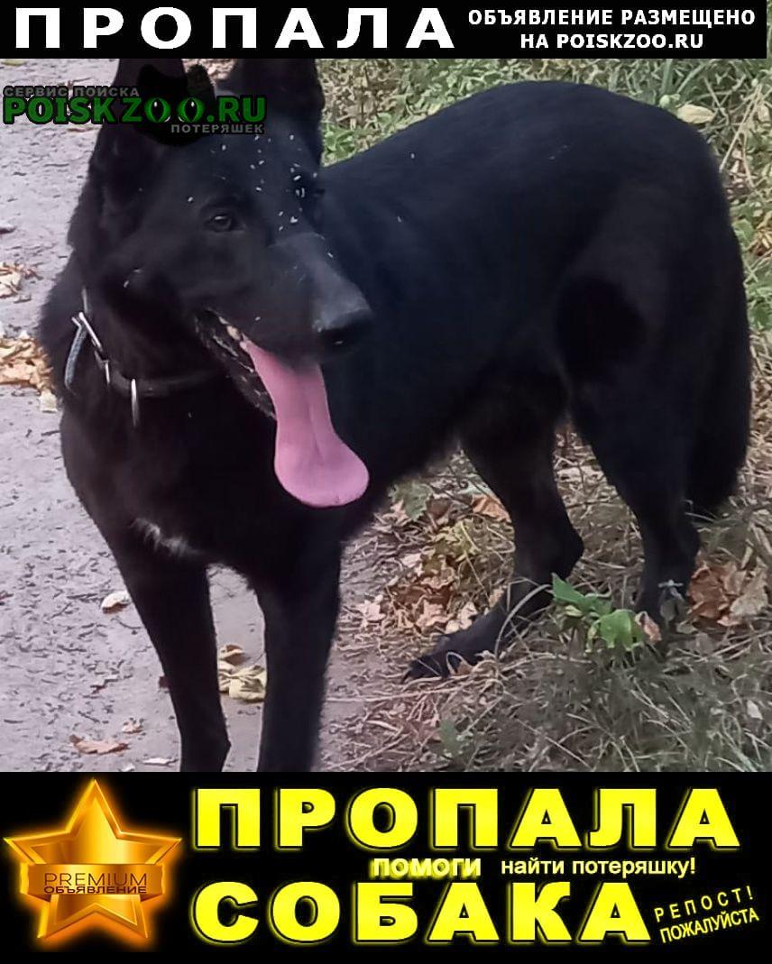 Пропала собака. помогите Воронеж