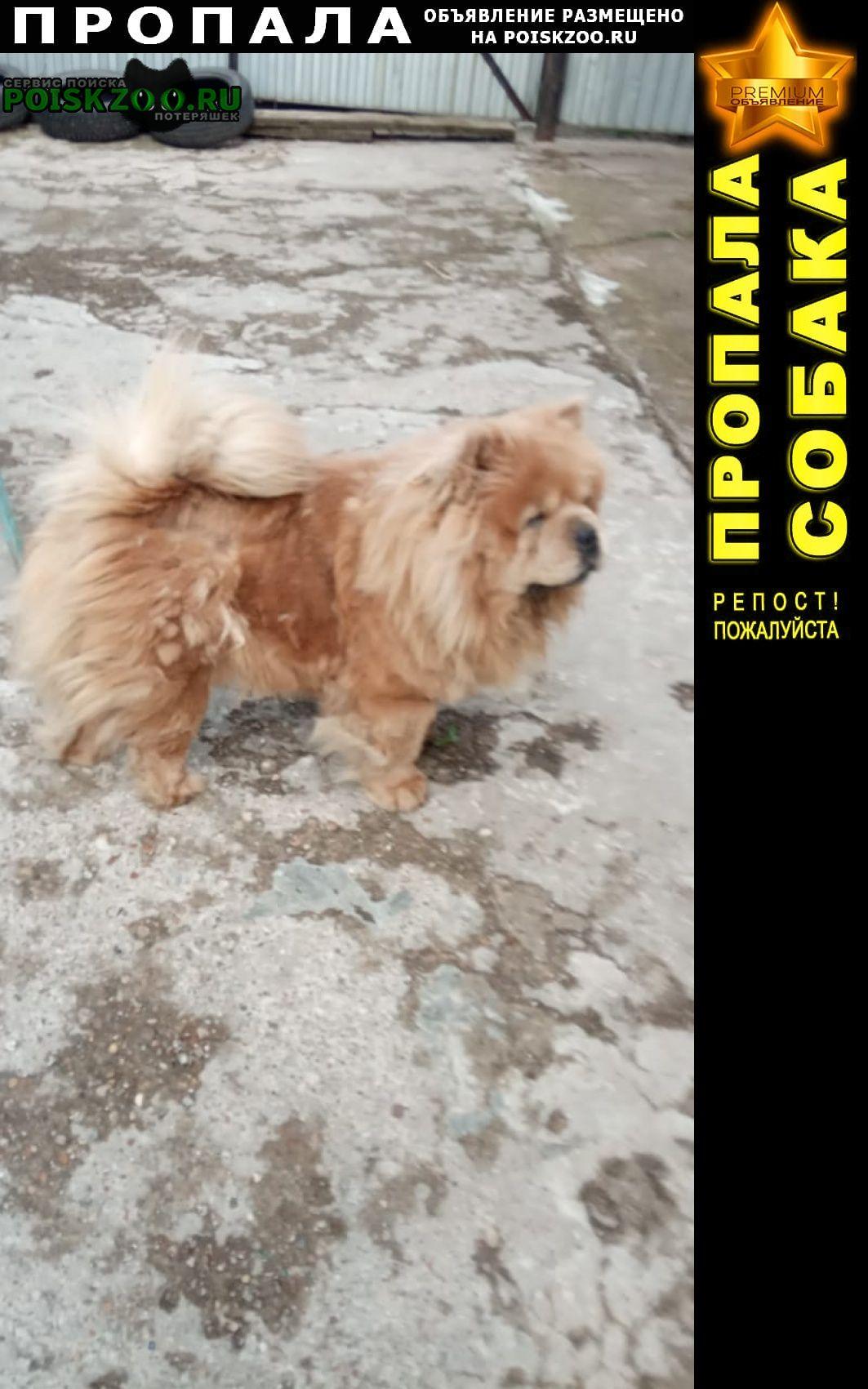 Пропала собака Уфа
