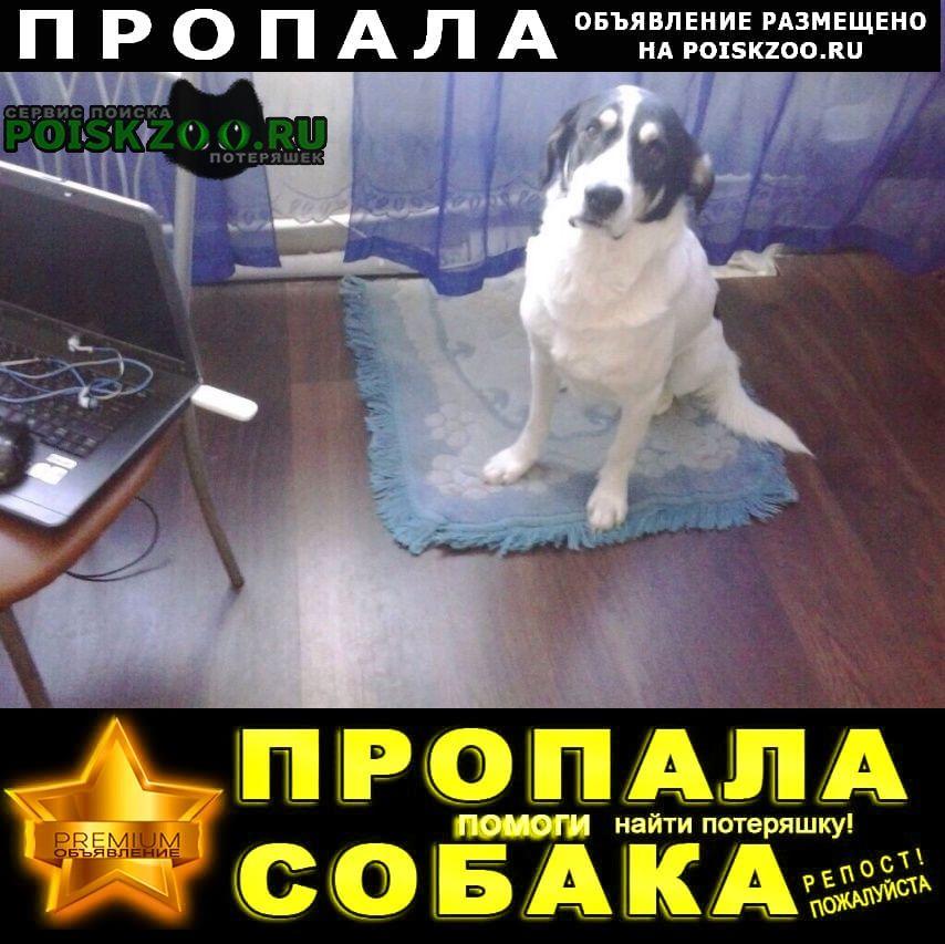 Пропала собака объявление Оренбург