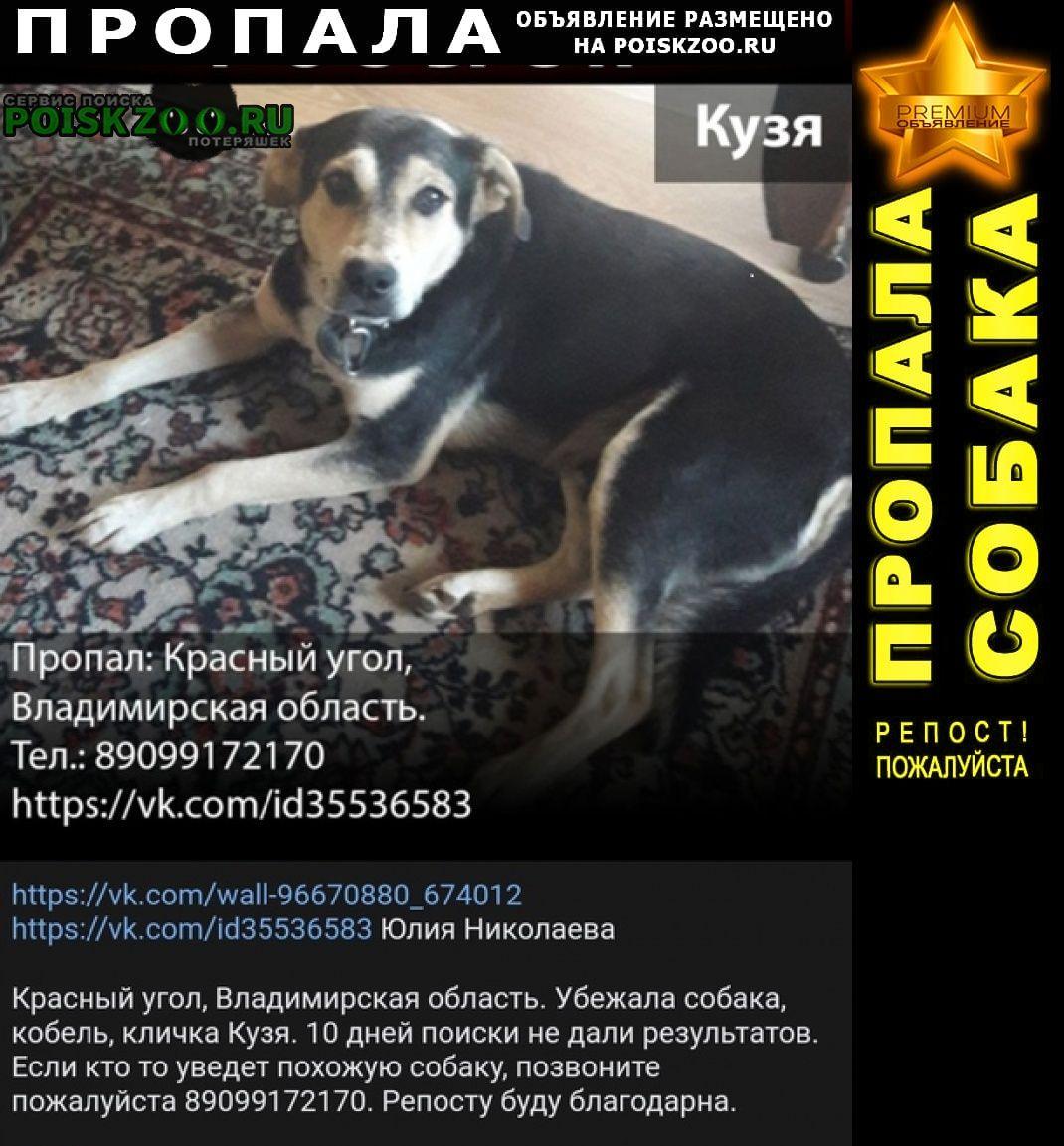 Пропала собака кобель пожалуйста помогите с поиском Киржач