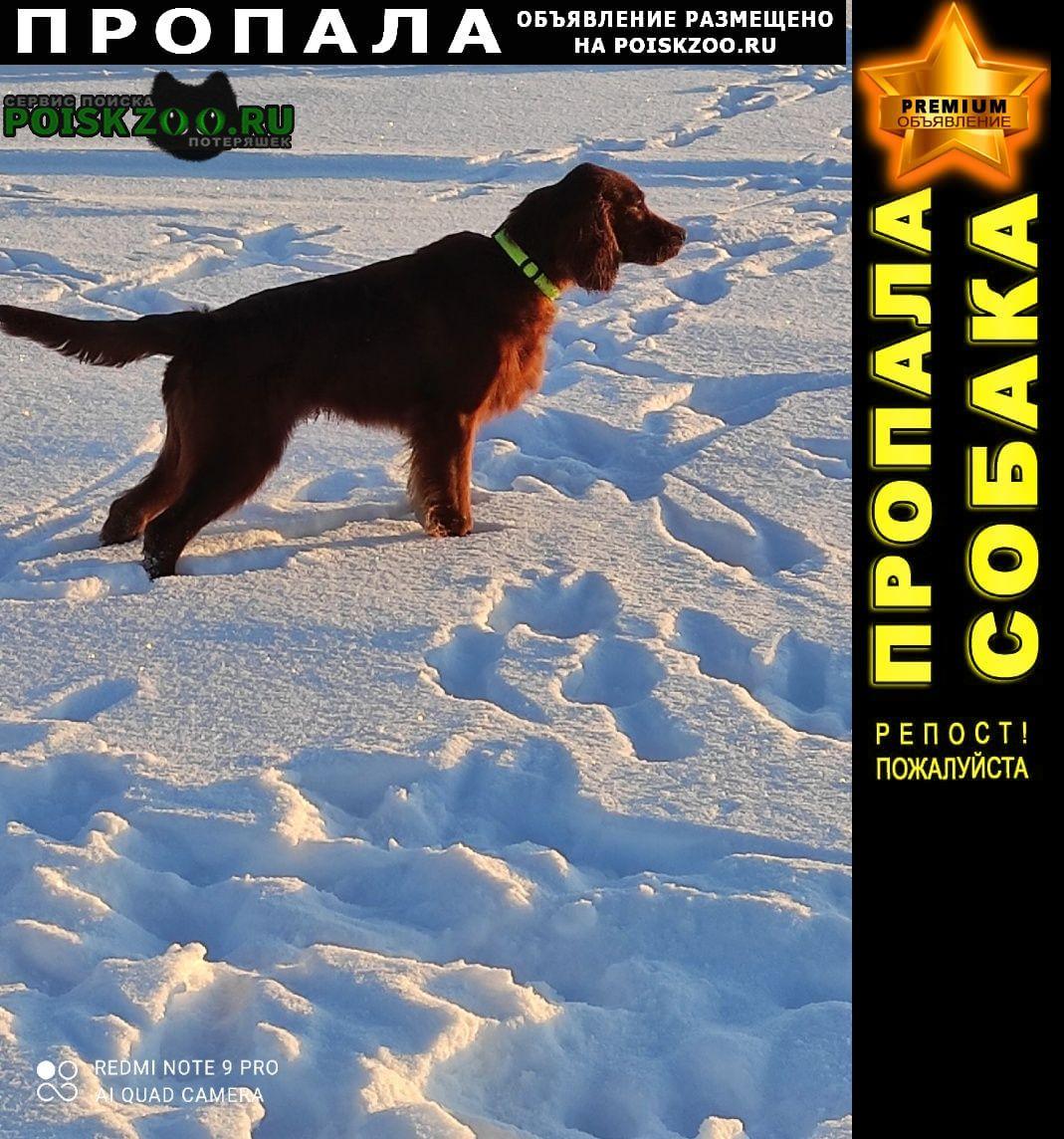 Пропала собака кобель Питкяранта