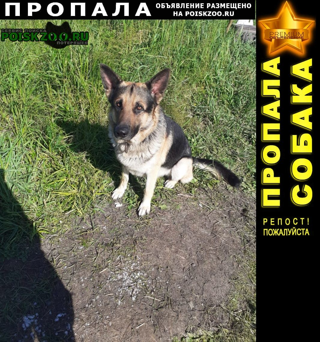Уфа Пропала собака немецкая овчарка, кличка гред, на шее цепь