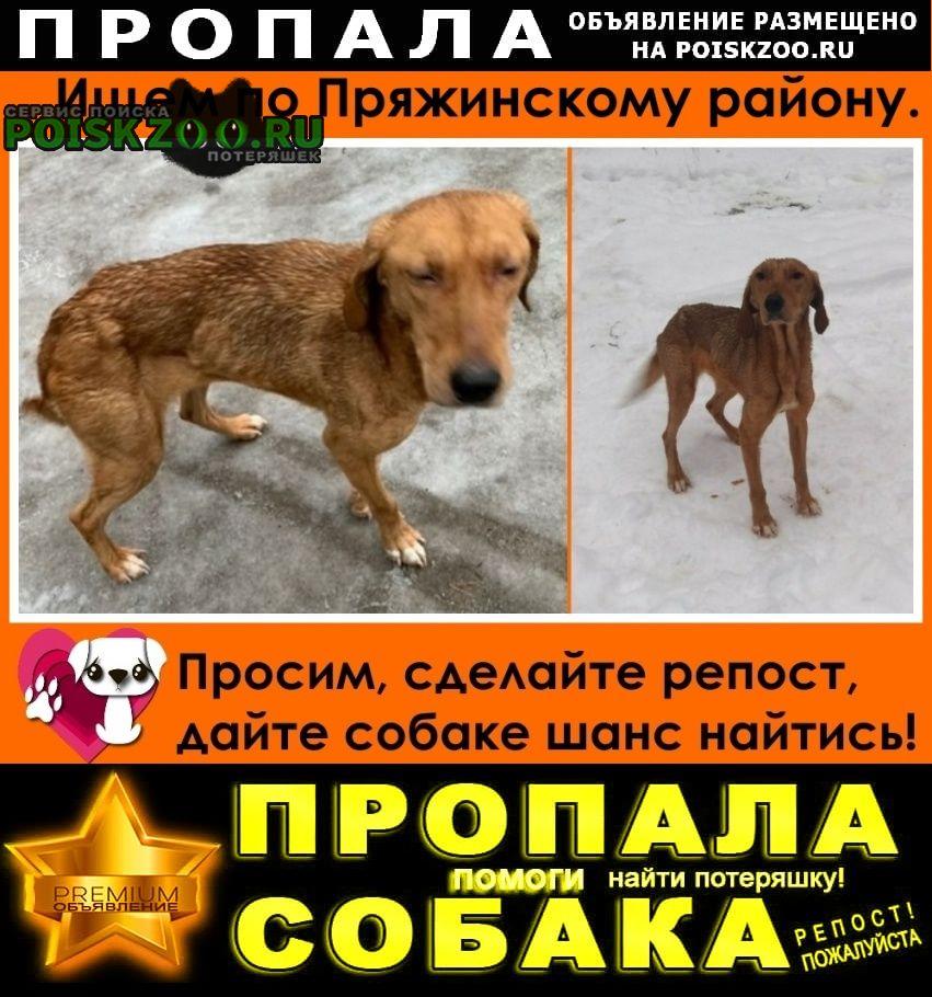 Пропала собака, ищем по пряжинскому району. Пряжа
