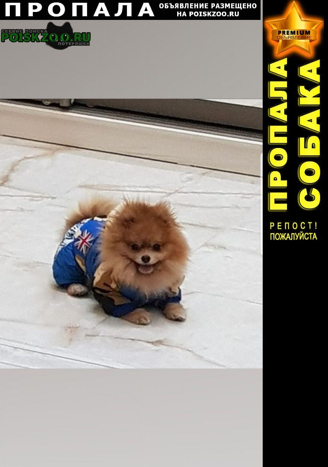 Пропала собака шпиц Нижний Новгород