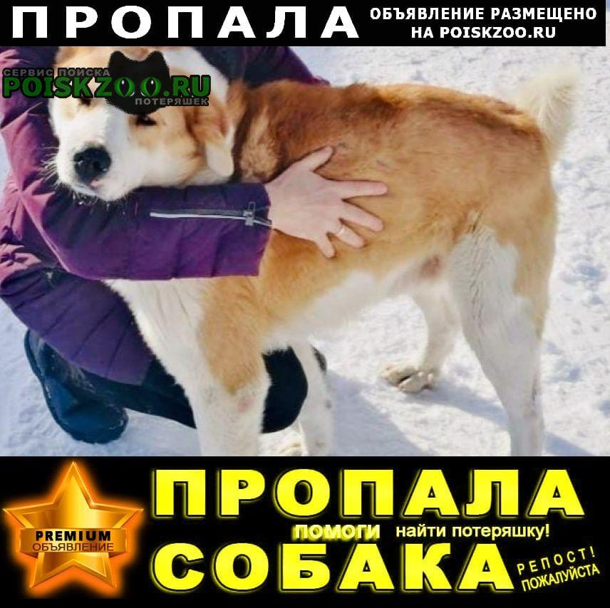 Пропала собака Щербинка